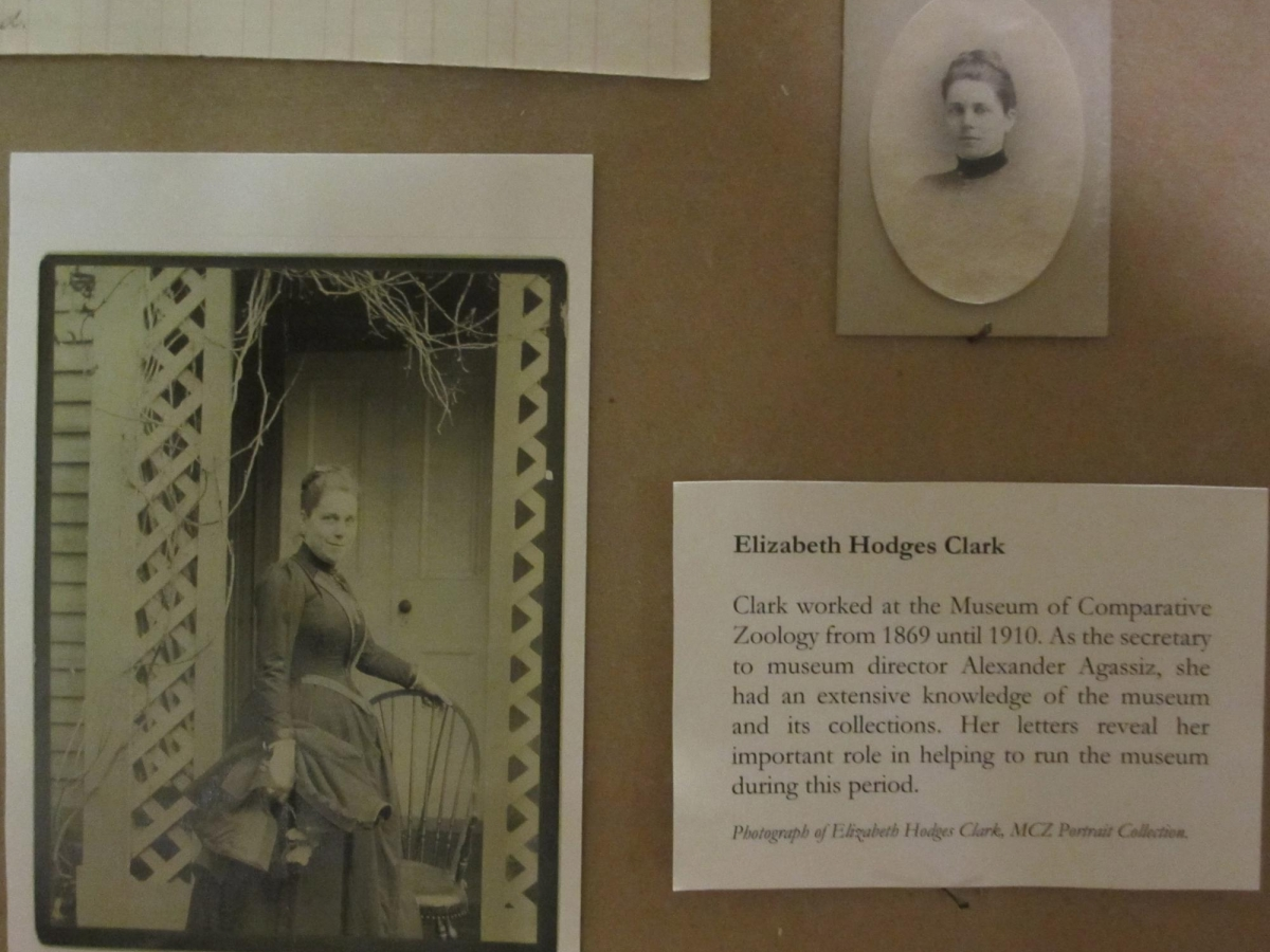 Portraits of Elizabeth Hodges Clark, museum employee