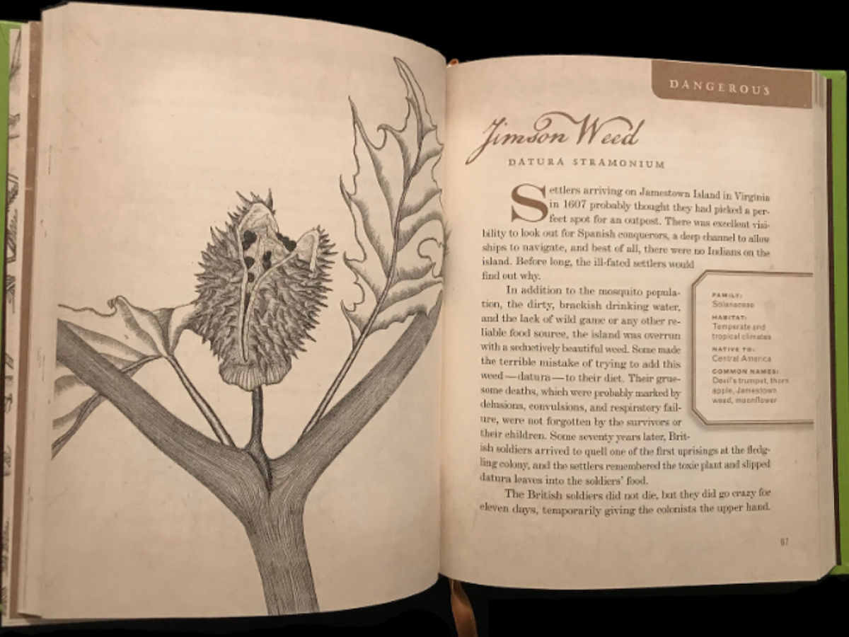 picture of a book interior, with a drawing of a jimson weed