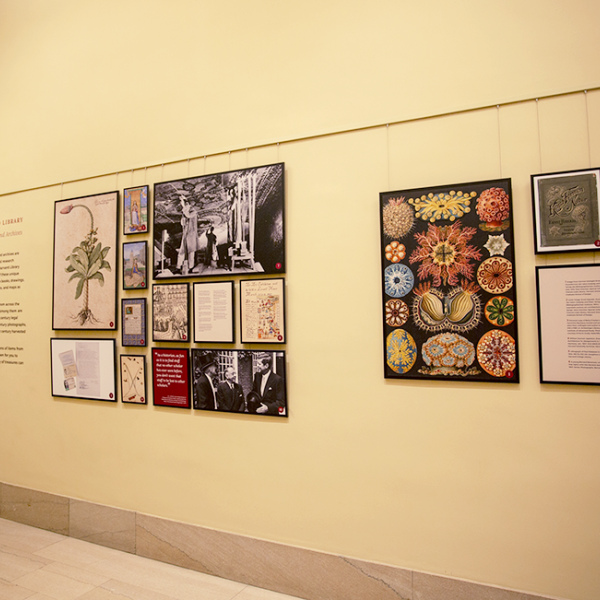 Image of Exhibition in Widener Library Gallery with wall hangings featuring highlights from Harvard Library's Archives and Special Collections